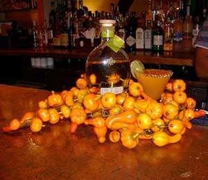 Partida Pumpkin Margarita Image