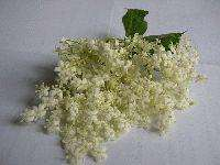 Elderflower Syrup Photo